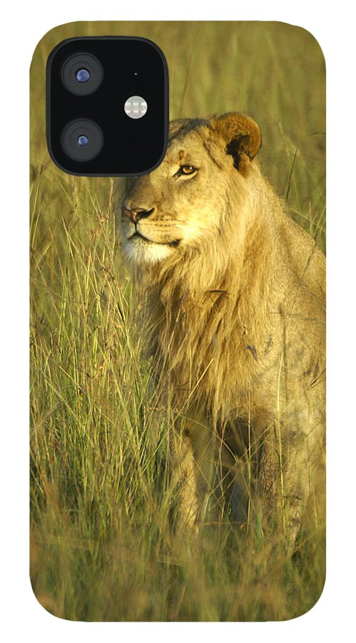 Africa IPhone 12 Case featuring the photograph Princely Lion by Michele Burgess