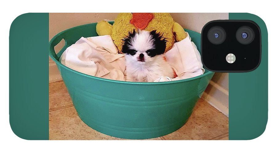 Japanese Chin IPhone 12 Case featuring the photograph Puppy in a Bucket, Japanese Chin by Kathleen Sepulveda