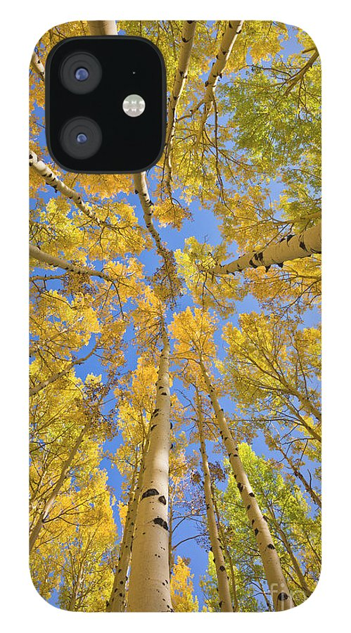 00559133 iPhone 12 Case featuring the photograph Quaking Aspens Overhead by Yva Momatiuk John Eastcott