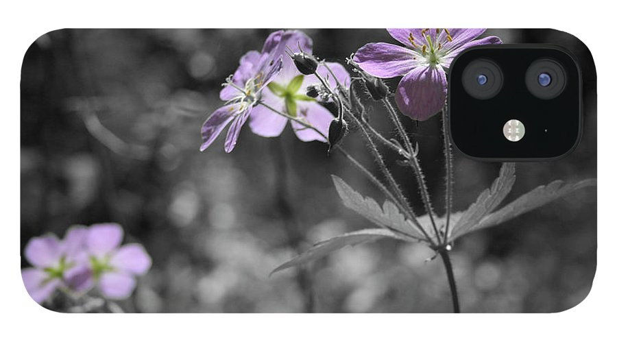Wildflowers IPhone 12 Case featuring the photograph Quiet Gatherings by Dylan Punke