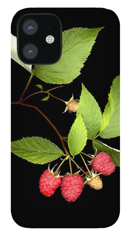 Red Raspberry IPhone 12 Case featuring the photograph Raspberry by Sandi F Hutchins