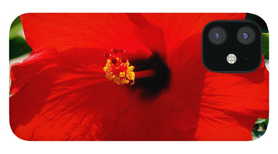 Red IPhone 12 Case featuring the photograph Red Bloomers by Paul Anderson