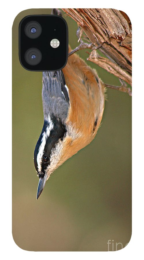 Nuthatch IPhone 12 Case featuring the photograph Red-breasted Nuthatch Upside Down by Max Allen