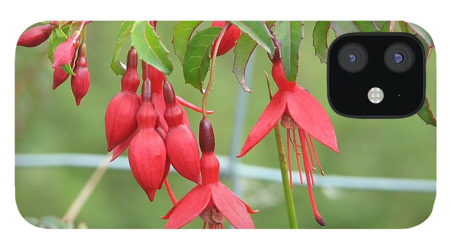 Fresia IPhone 12 Case featuring the photograph Red Fresia by Kelly Mezzapelle