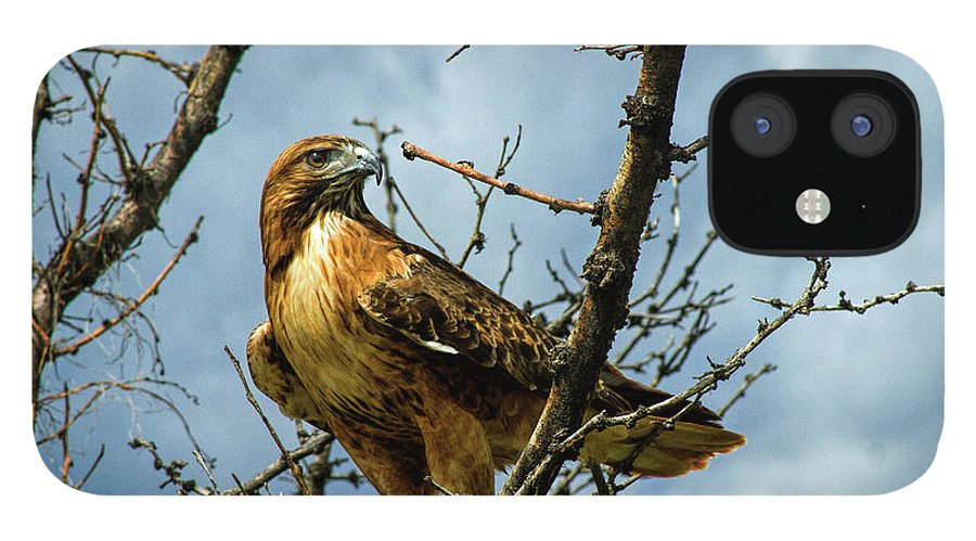 Hawk IPhone 12 Case featuring the photograph Red-Tailed Hawk by Alana Thrower