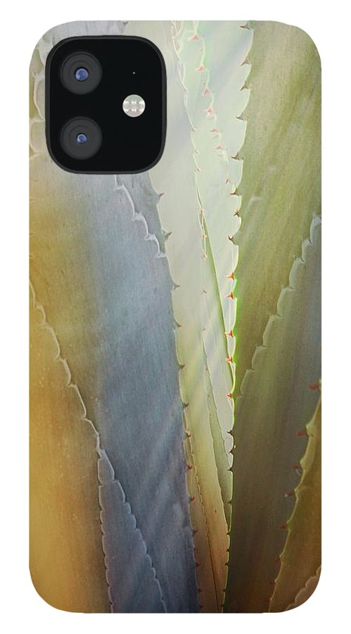 Nature IPhone 12 Case featuring the photograph Sawtooth Agave Gold Light by Zayne Diamond Photographic