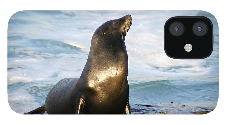 Sealion IPhone 12 Case featuring the photograph Sealion by Anthony Jones