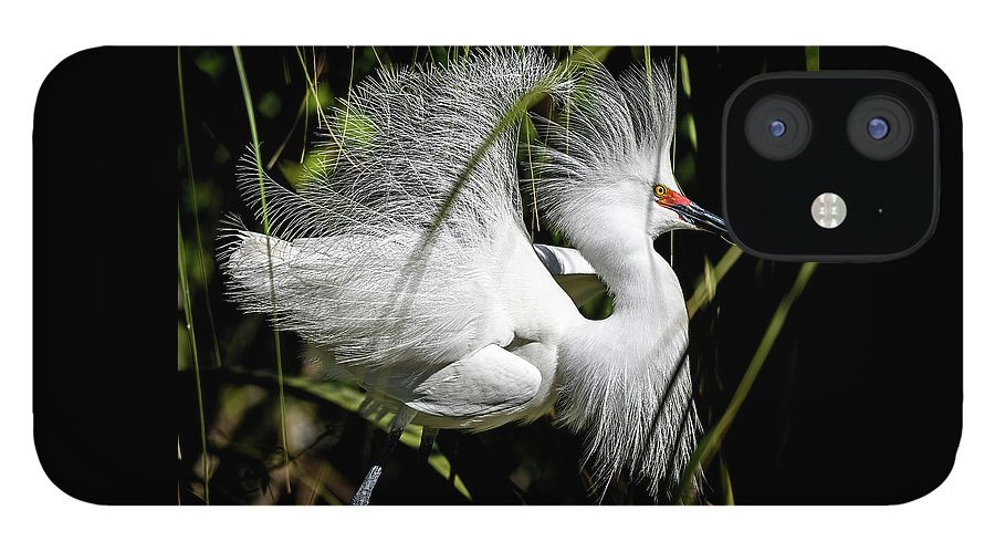Snowy Egret IPhone 12 Case featuring the photograph Snowy Egret by Steven Sparks