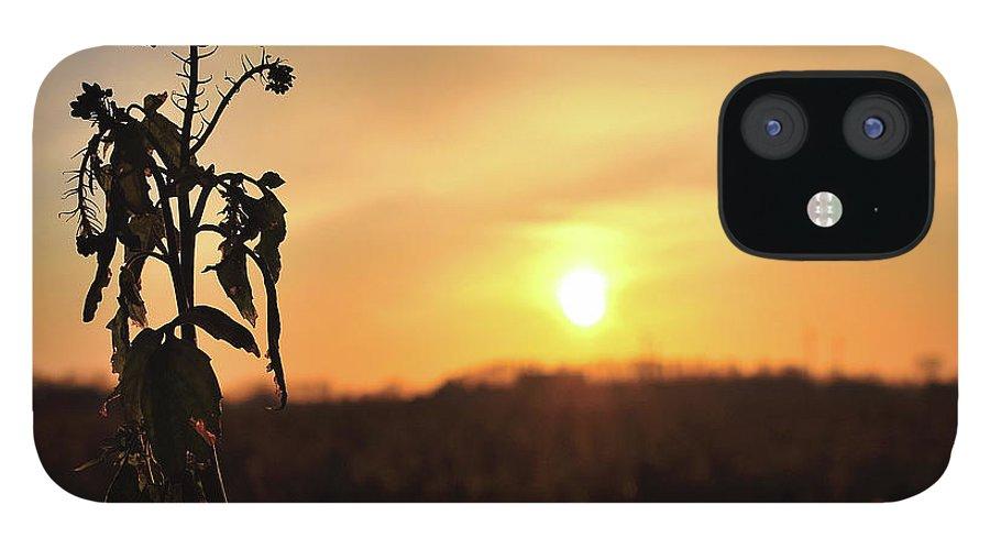 Sonnenuntergang Blume Flowwer Sky Himmel IPhone 12 Case featuring the photograph Sonnenuntergang by Scimitarable