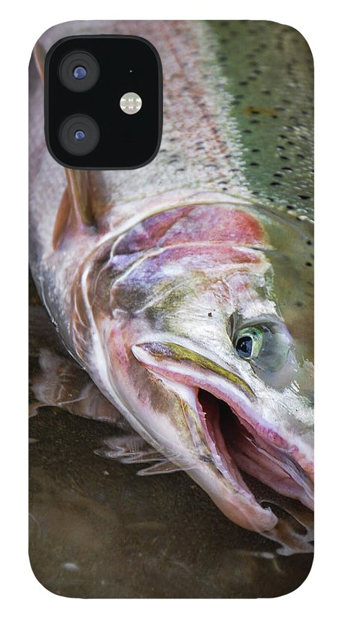 Fishing IPhone 12 Case featuring the photograph Steelhead 1 by Jason Brooks
