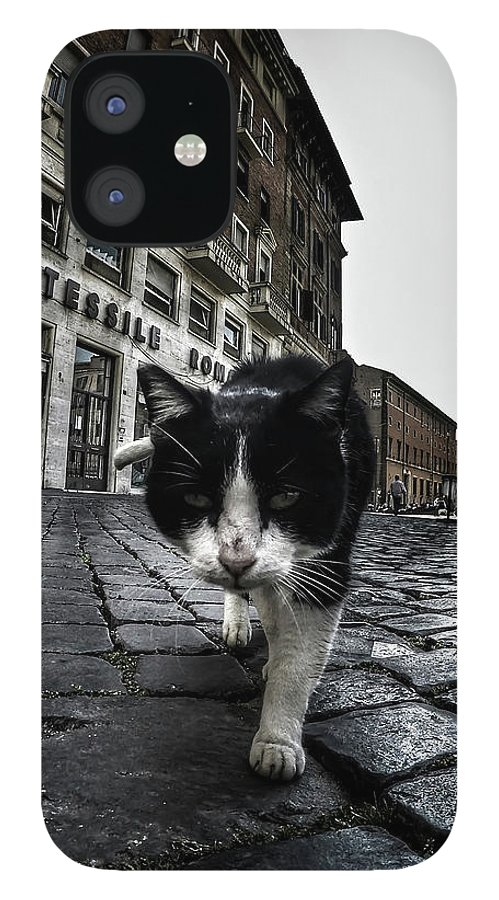 Cat IPhone 12 Case featuring the photograph Street Cat by Nicklas Gustafsson