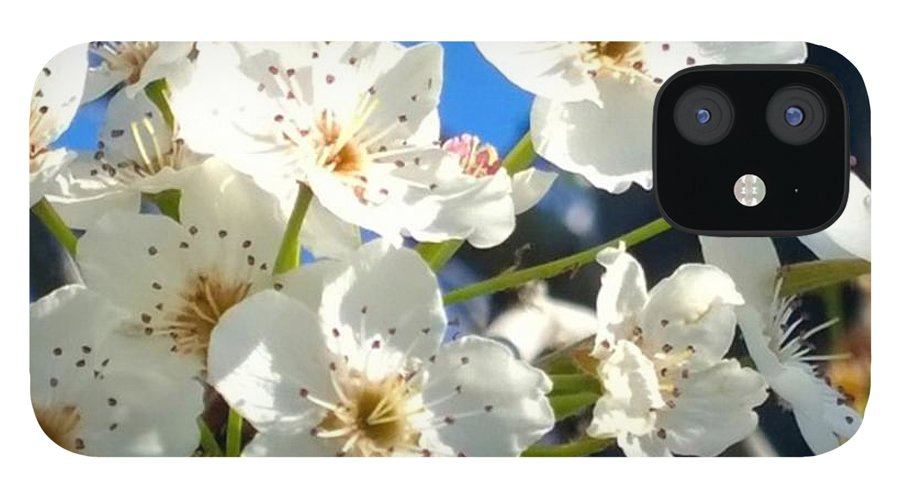 Garden IPhone 12 Case featuring the photograph #sun Drenched #tree #blossoms So Sweet by Shari Warren