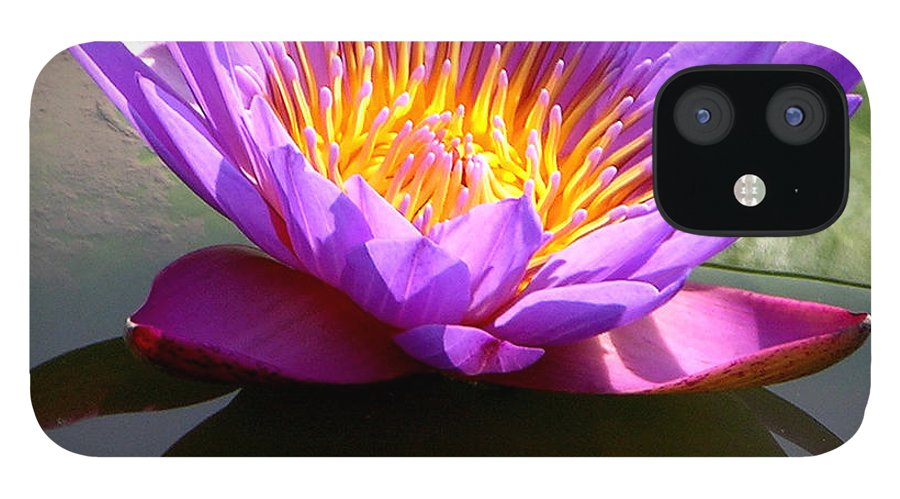 Water Lily IPhone 12 Case featuring the photograph Sunburst Lily by John Lautermilch