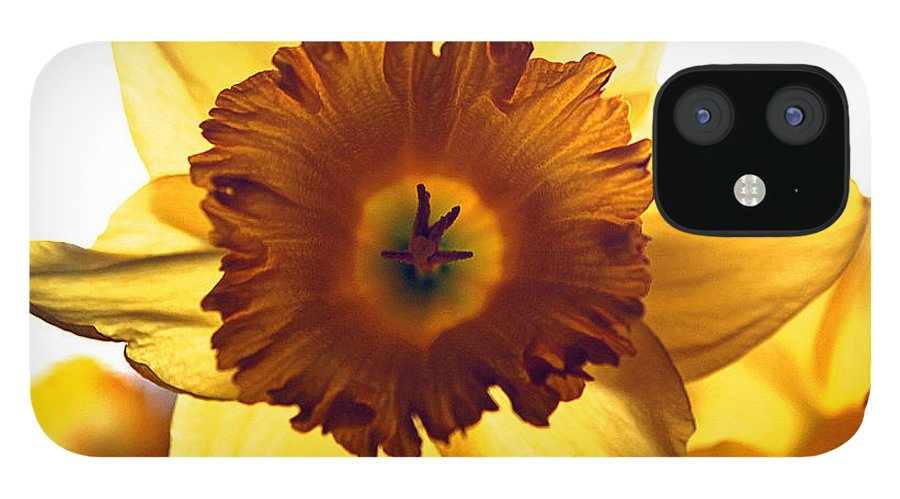 Yellow Sun Sunshine Daffodil Flower Bloom Edit Modern Edge Photograph Nature IPhone 12 Case featuring the photograph Sunshine. by Stevie Ellis