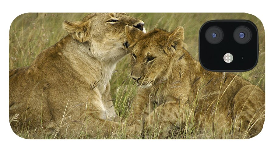 Africa IPhone 12 Case featuring the photograph Sweet Thing by Michele Burgess
