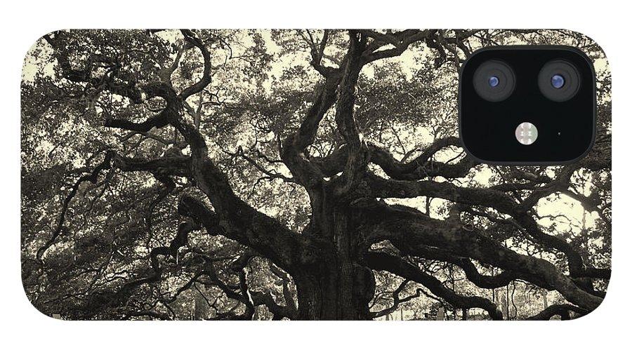 Angel Oak IPhone 12 Case featuring the photograph The Angel Oak by Susanne Van Hulst