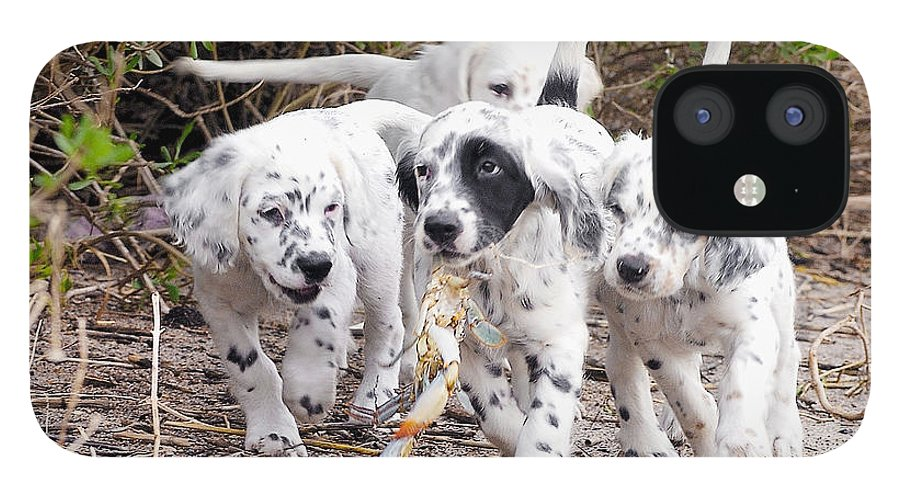 English Setter IPhone 12 Case featuring the photograph The Puppy's Prize by Scott Hansen