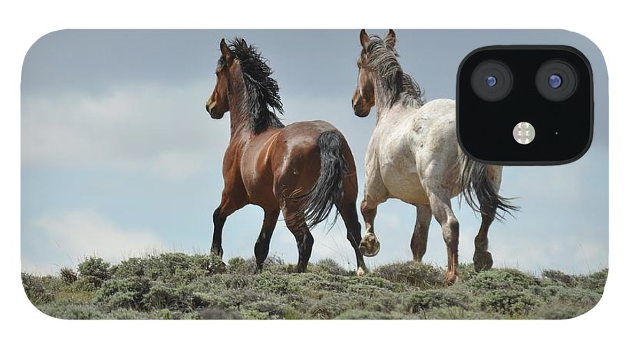 Wild Horses IPhone 12 Case featuring the photograph Too Beautiful by Frank Madia