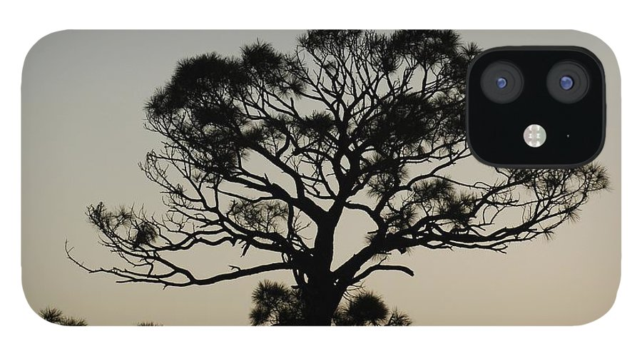 Tree IPhone 12 Case featuring the photograph Trees In Sunset by Rob Hans
