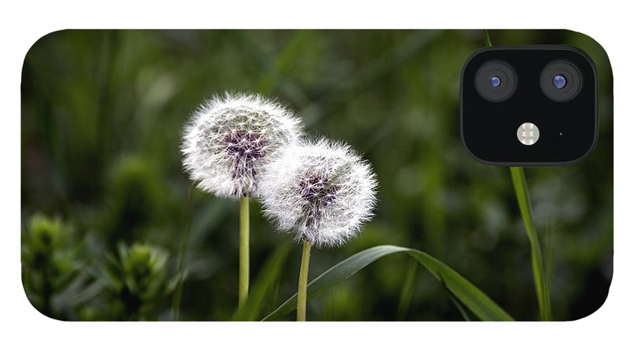 Abstract IPhone 12 Case featuring the photograph Twin Dandelions by Adrian Bud