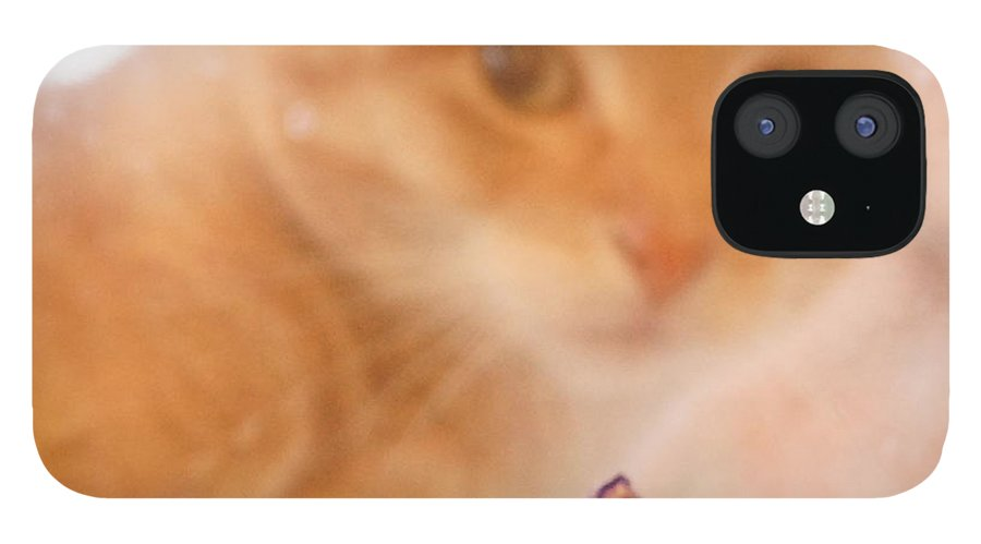 Orange Tabby Cat IPhone 12 Case featuring the digital art Violets with Cat by Jana Russon