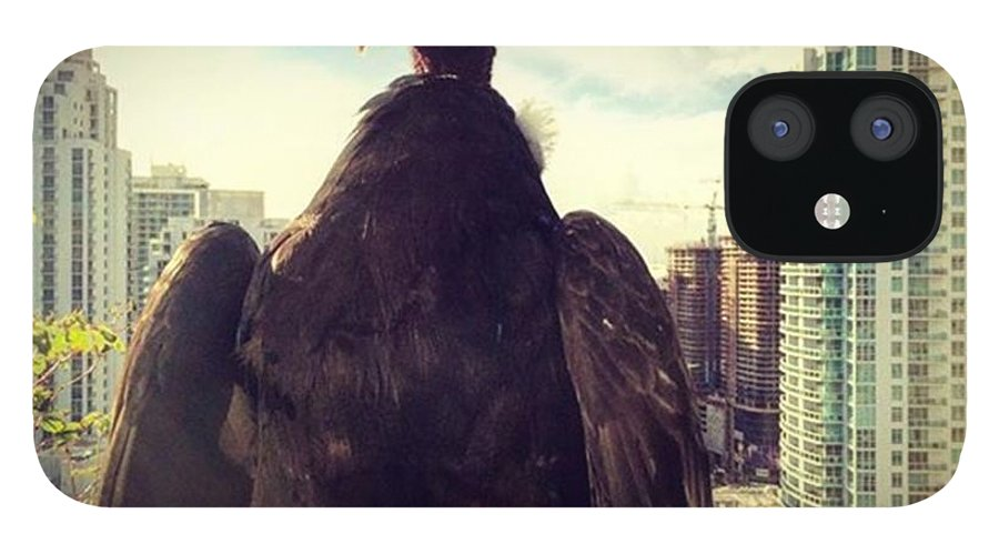 Building IPhone 12 Case featuring the photograph Vulture Perched On A High Rise Building by Juan Silva