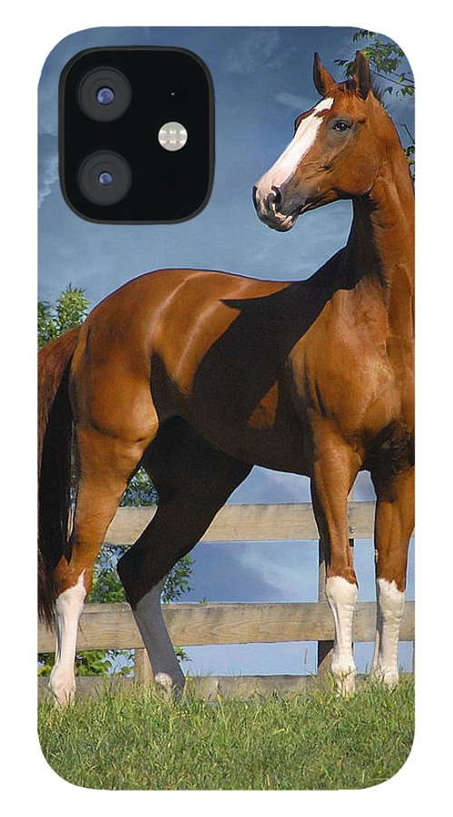 Horses IPhone 12 Case featuring the photograph Welt Adel by Fran J Scott