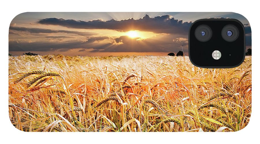 Wheat IPhone 12 Case featuring the photograph Wheat At Sunset by Meirion Matthias