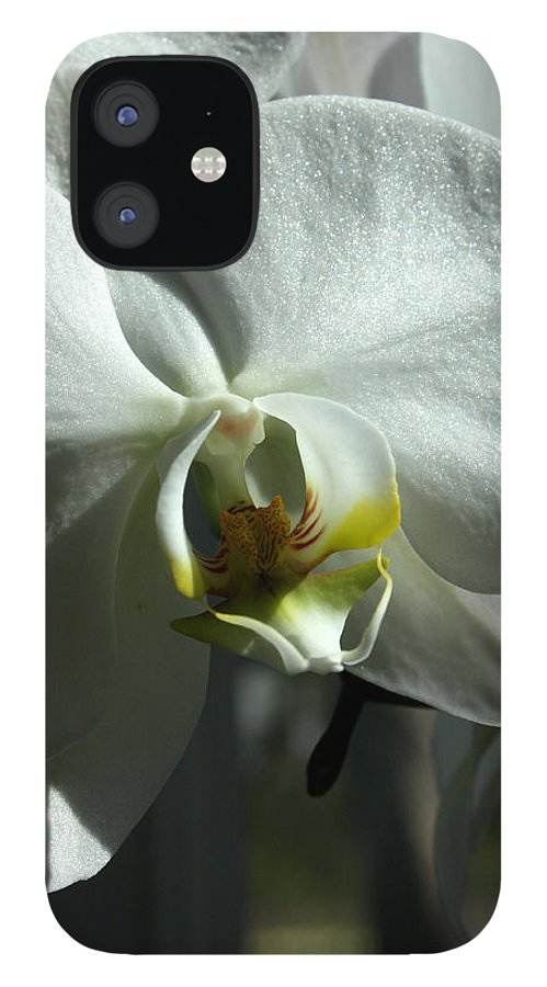 White IPhone 12 Case featuring the photograph White Orchid by David Bearden