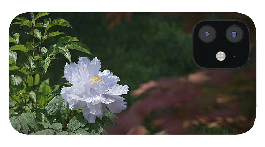 White IPhone 12 Case featuring the photograph White Peony by David Bearden