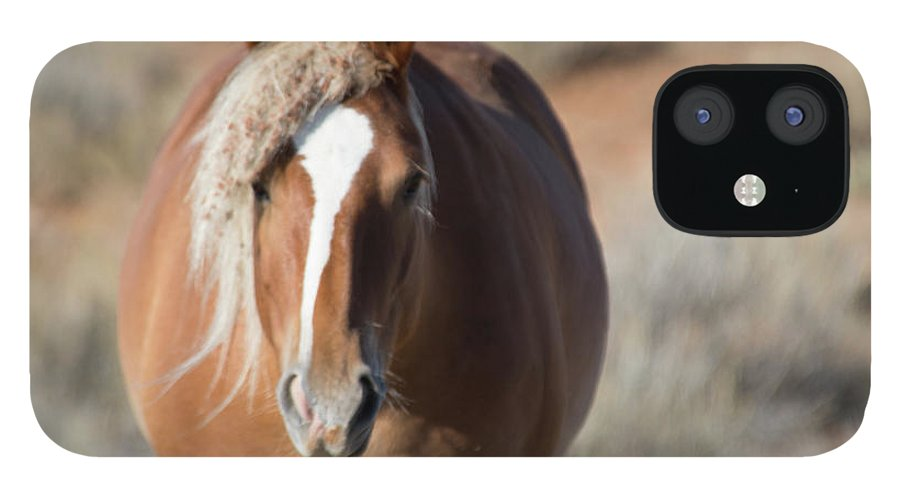 Cody IPhone 12 Case featuring the photograph Wild Horses of Park County Wyoming by Frank Madia