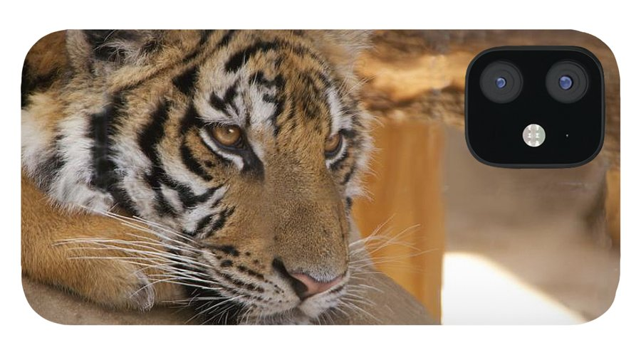 Tiger IPhone 12 Case featuring the photograph Young Tiger by Toni Berry