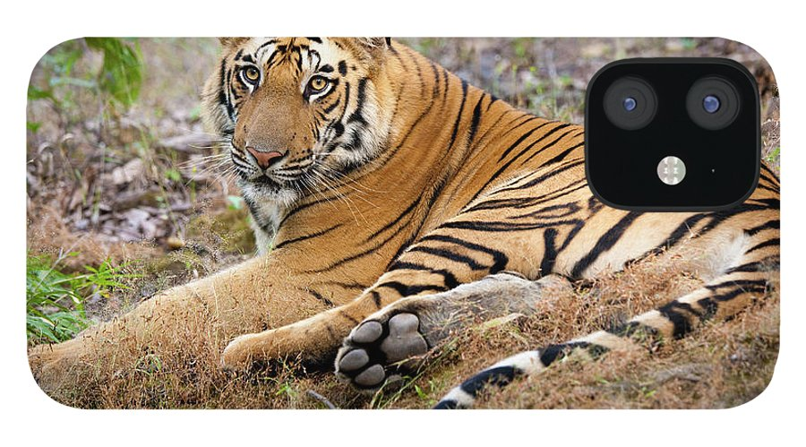 Looking Over Shoulder IPhone 12 Case featuring the photograph An Adult Tiger In Bandhavgarh National by Mint Images - Art Wolfe