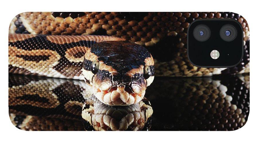 Copenhagen IPhone 12 Case featuring the photograph Burmese Python by Henrik Sorensen