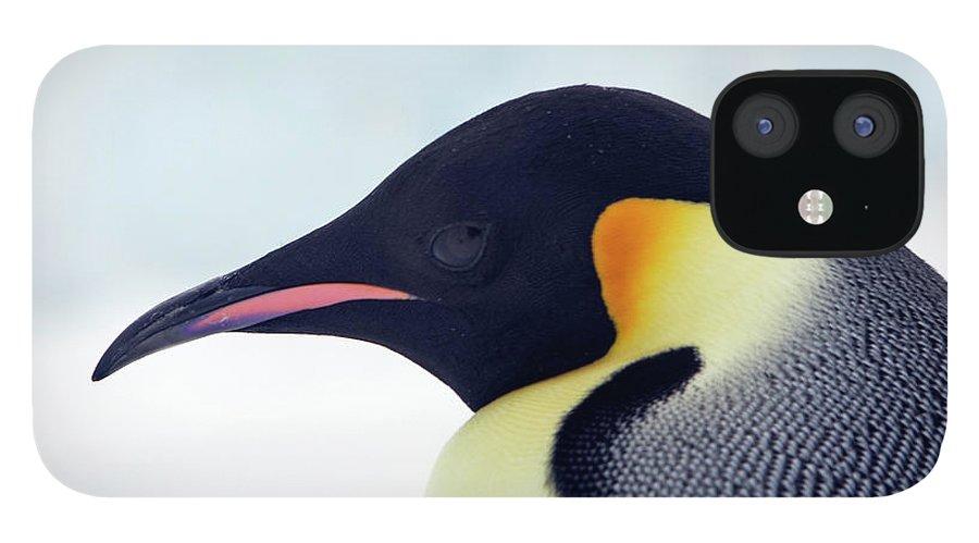 Emperor Penguin IPhone 12 Case featuring the photograph Emperor Penguin by Sylvain Cordier