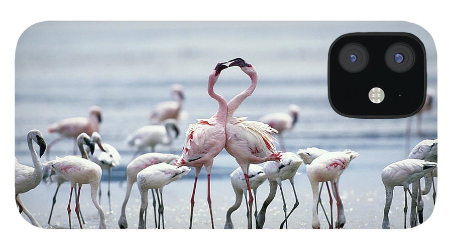 Tanzania IPhone 12 Case featuring the photograph Lesser Flamingoes Phoeniconaias Minor by Paul Souders
