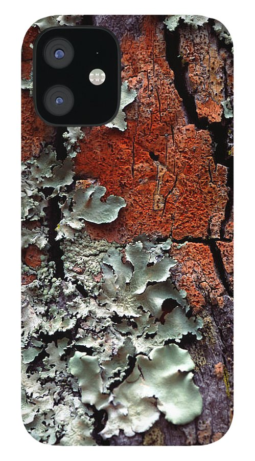 Built Structure IPhone 12 Case featuring the photograph Lichen On Tree Bark by John Foxx