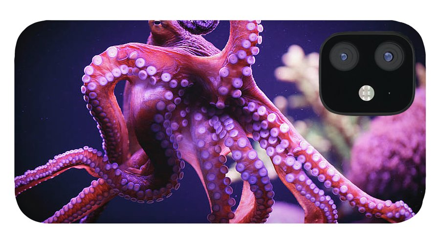 Underwater iPhone 12 Case featuring the photograph Octopus by Reynold Mainse / Design Pics