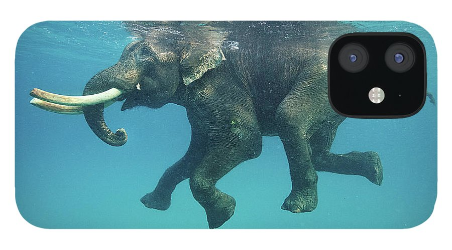 Underwater IPhone 12 Case featuring the photograph Swimming Elephant by Mike Korostelev Www.mkorostelev.com