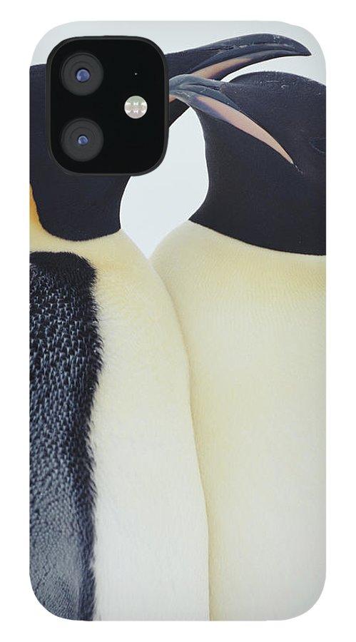 Emperor Penguin iPhone 12 Case featuring the photograph Two Emperor Penguins Aptenodytes by Joseph Van Os