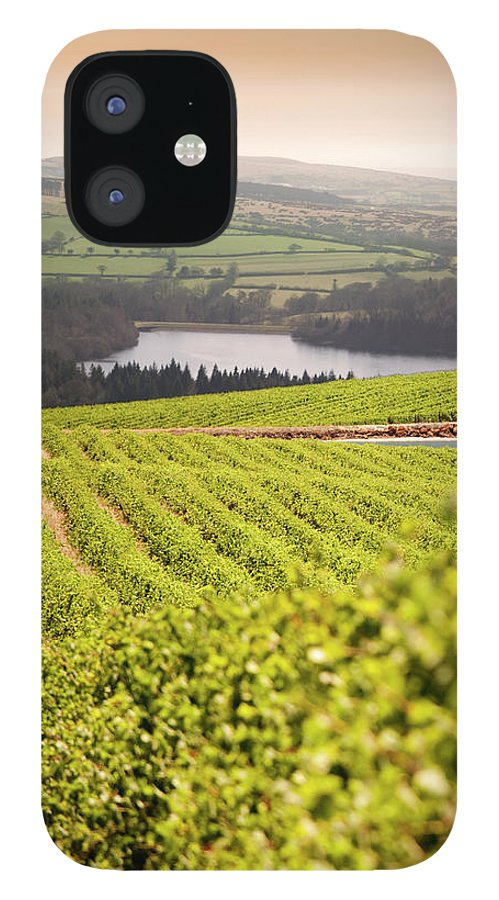 Scenics IPhone 12 Case featuring the photograph Vineyard At Sunset by Lockiecurrie