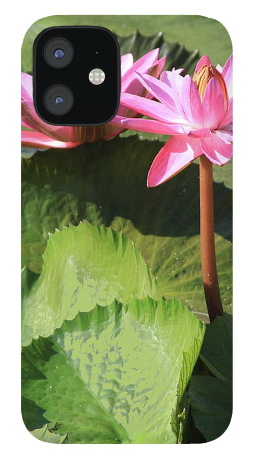 Water Lilies IPhone 12 Case featuring the photograph Water Lilies in Sunlight by John Lautermilch