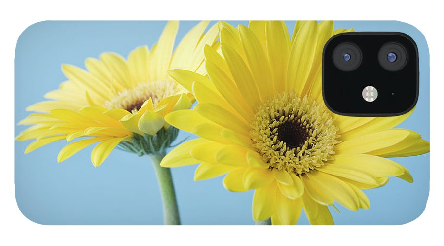 Two Objects IPhone 12 Case featuring the photograph Yellow Flowers On Blue Background by Kristin Lee