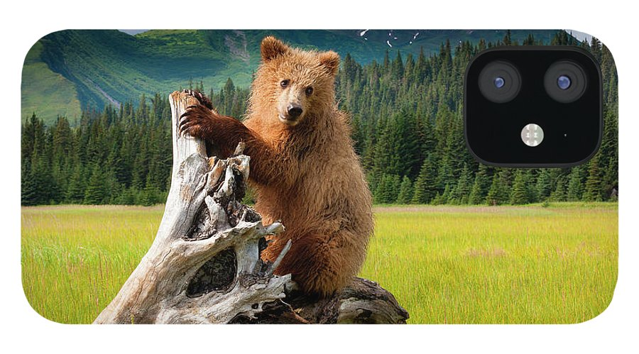 Brown Bear IPhone 12 Case featuring the photograph Brown Bear, Lake Clark National Park by Mint Images/ Art Wolfe