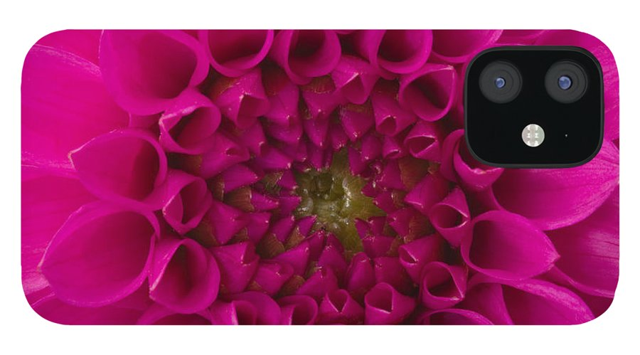 Saturated Color IPhone 12 Case featuring the photograph Dahlia by Vidok