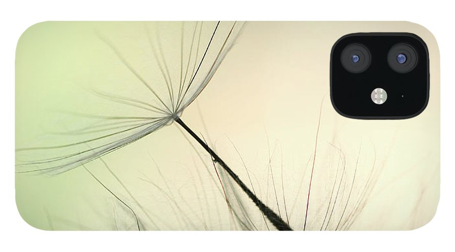 Single Flower IPhone 12 Case featuring the photograph Dandelion Seed by Jasmina007