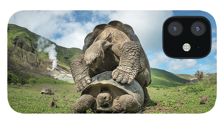 Animal iPhone 12 Case featuring the photograph Volcan Alcedo Giant Tortoises Mating by Tui De Roy