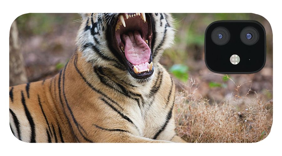 Snarling iPhone 12 Case featuring the photograph An Adult Tiger In Bandhavgarh National by Mint Images - Art Wolfe