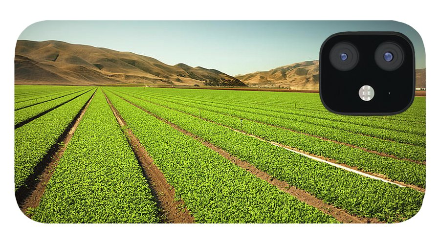 Environmental Conservation IPhone 12 Case featuring the photograph Crops Grow On Fertile Farm Land by Pgiam