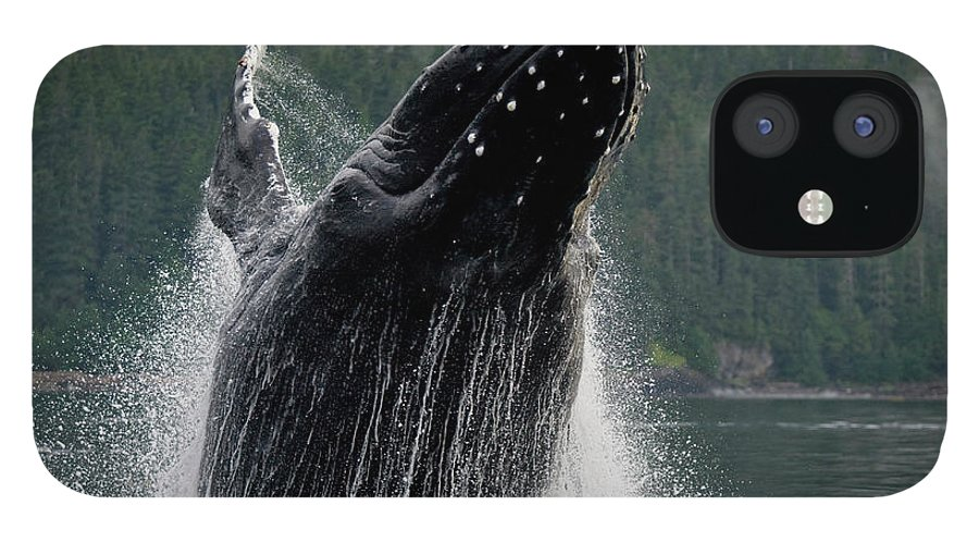 Animal Themes IPhone 12 Case featuring the photograph Breaching Humpback Whale, Alaska by Paul Souders